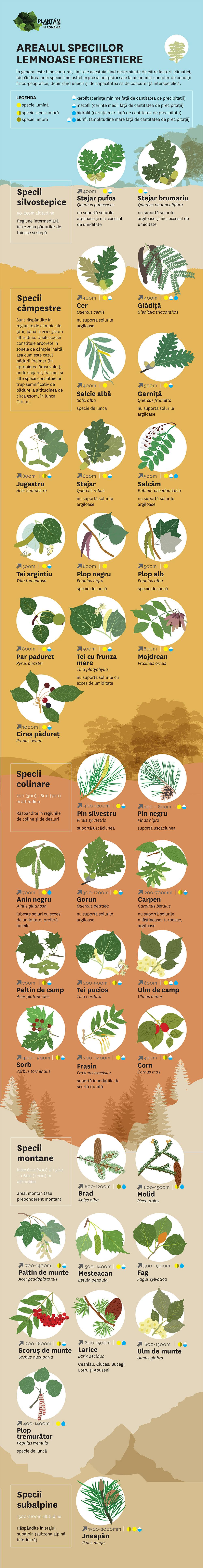 infografic-specii-silvostepice-1