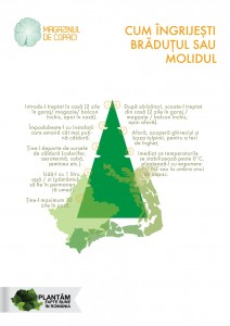 infografic ingrijire