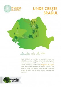 infografic plantare
